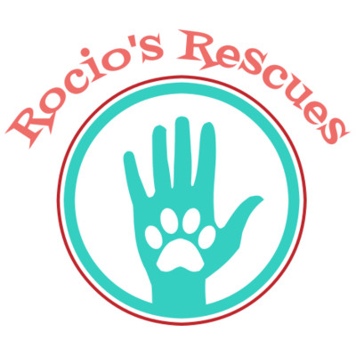 Pet Rescue and rehabilitation    /     Pet adoptions
